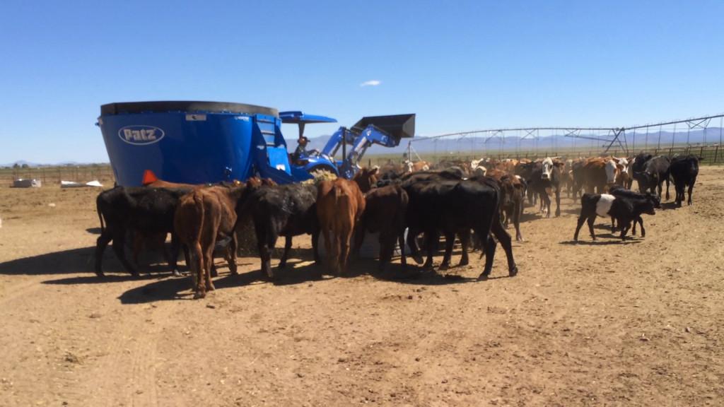 Starbar Ranch  (9)0295